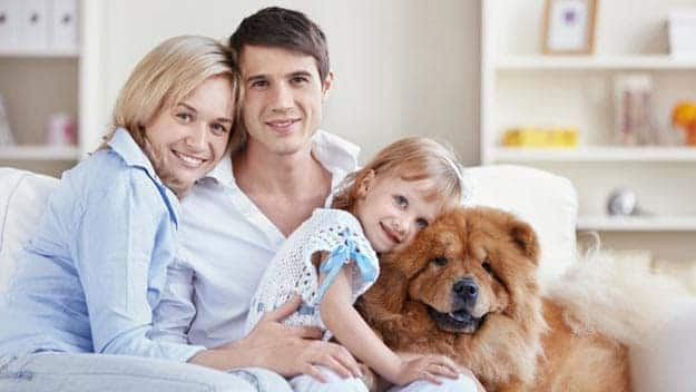 Wills & Trusts dog-young-family Direct Wills Bridgnorth